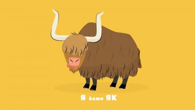 27_yak_animal